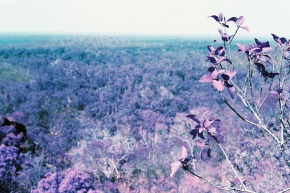 LomoChrome Purple Film